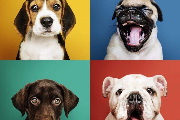 Vétérinaire, animaux de compagnie